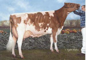 AYCAN000009591001 300x210 - Ayrshire breed
